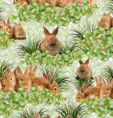 Gulliga Kaniner - Ekologiskt
