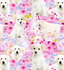 Puppy Love - ekologiskt