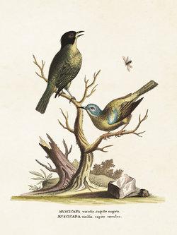Poster  Fåglar 18 * 24 cm