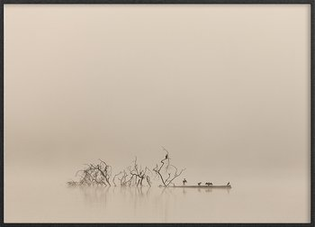 Cormorant in the fog