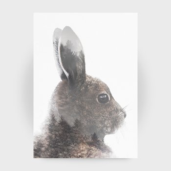 Hare in colour