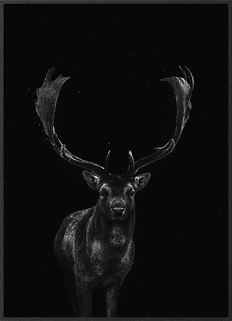 Fallow deer in the night