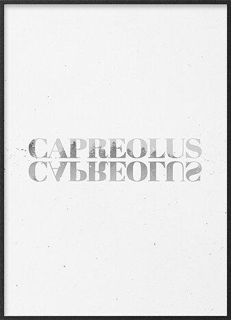 Capreolus capreolus