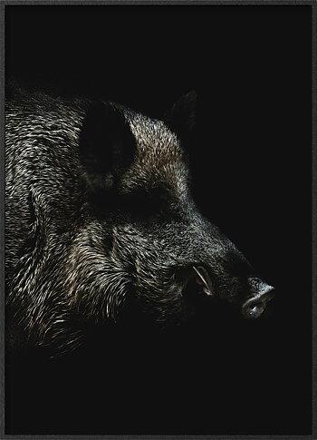Wild boar in the night