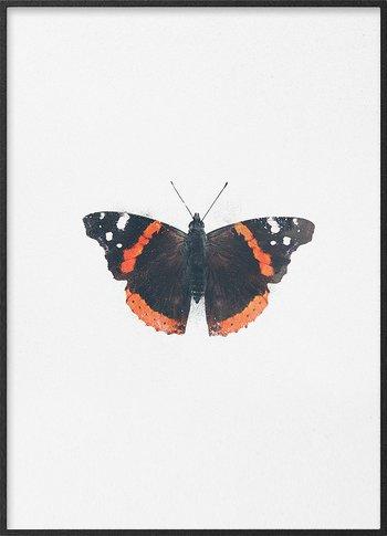 Admiral sommerfugl