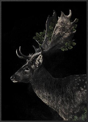 Dovhjort svart