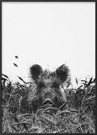 Wild boar in wheat