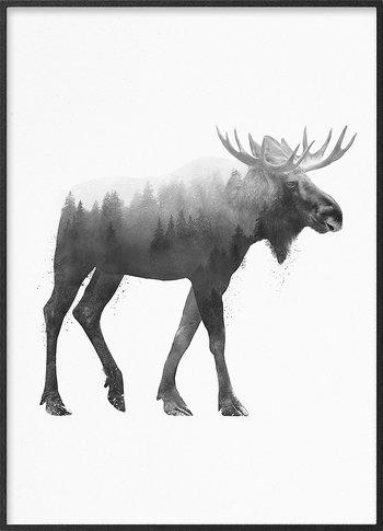 European moose