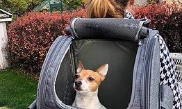 Resa med hund