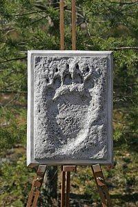 Spårtavla björn bakfot