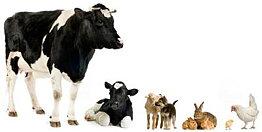 Djur och lantbruk