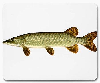 Gädda fisk djur 1 musmatta