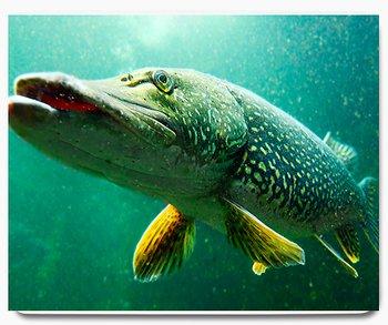 Gädda fisk djur 2 - musmatta
