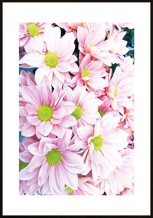 Rosa blommor ram 2 - poster
