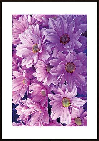 Rosa blommor ram 3 - poster