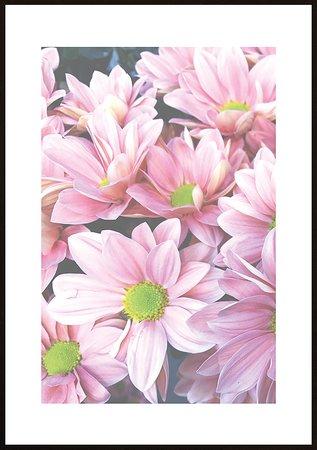 Rosa blommor ram 10 - poster