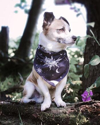 Celestial - Pet Bandana