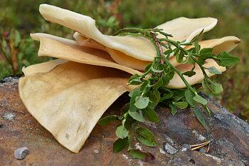 RAUH! älgfluga chips - även för allergiska hundar  *5 PACK*