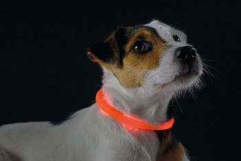 Halsband LED Yukon  Orange - HUNTER