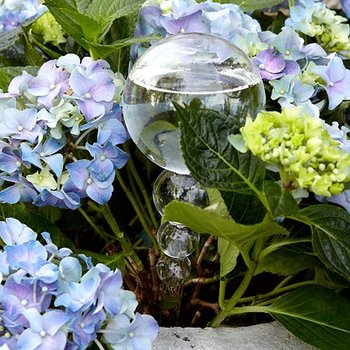 Självbevattningsglas klar