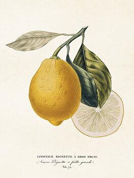 Sköna Ting - poster 18x24 - Citron