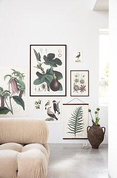 Sköna Ting - poster växter insekter vintage 18x24 - Gran