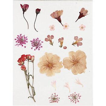 Pressade blomor, ljusrosa, 1 förp.