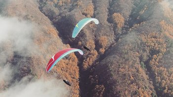 DAVINCI gliders Tango EN C