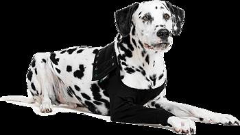 Recovery sleeve /medicinskt benskydd för framben på  hund