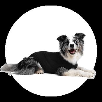 Återhämtningsbody  / medicinskbody  / skyddsbody / operationsbody till hund (  hel svart ) från 329kr