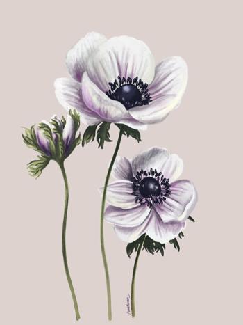 Vita anemoner