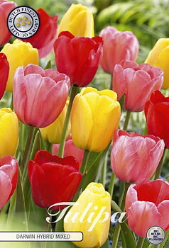 "Dawin Hybride Tulips    ""Mixed"""