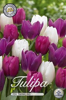 Storpack Tulipa Spring Sunset  20-pack