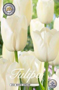 Storpack Tulipa White Dream  20-pack