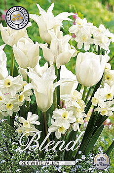 """Storpack Narcissus/Tulipa """"White Valley Mixed""""  20-pack"""