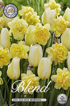 """Storpack Narcissus/Tulipa """"Golden Morning""""  20-pack"""