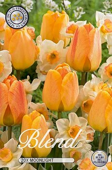 "Storpack Narcissus/Tulipa ""Moonlight""  20-pack"
