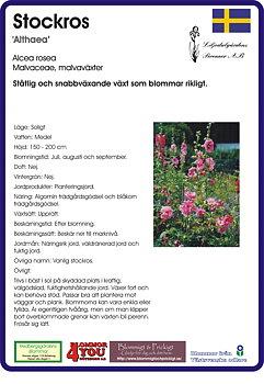 Alcea ficifolia (Althaea)