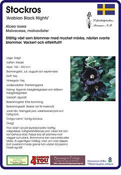 Alcea rosea nigra 'Arabian Black Nights'