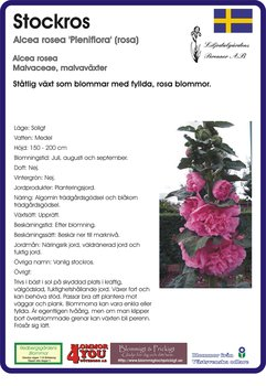 Alcea rosea 'Pleniflora' (rosa)