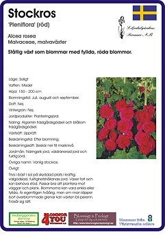 Alcea rosea 'Pleniflora' (röd)
