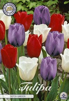 """Garden Tulips   """"Dutch Garden"""""""