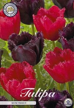 """Garden Tulips   """"Moneymaker"""""""