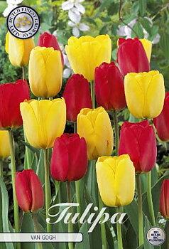 """Garden Tulips   """"Van Gogh"""""""