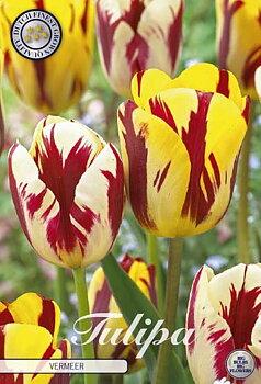 """Garden Tulips   """"Vermeer """""""