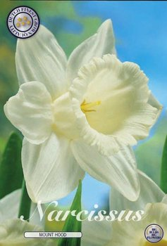 """Narcissus Trumpet/Large Cupped """"Mount Hood"""""""