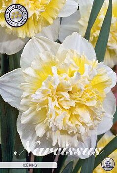 """Narcissus Double  """"Ice King """""""