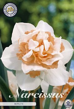 """Narcissus Double  """"Replete"""""""