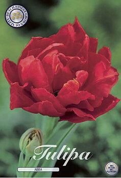 "Double Early Tulips  ""Abba"""
