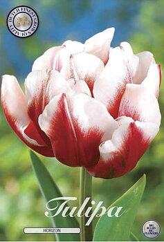 """Double Early Tulips  """"Horizon"""""""